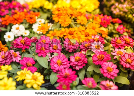 autumn flower vintage. - stock photo