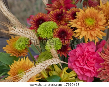Autumn flowers and colors in bloom. - stock photo