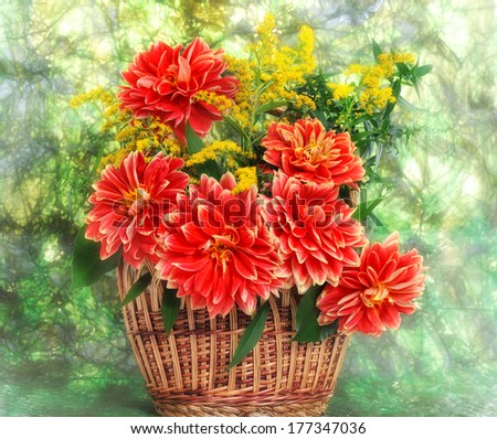 autumn flowers of georgina in basket  on green background - stock photo