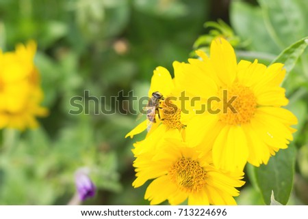 Autumn flowers on a flower bed