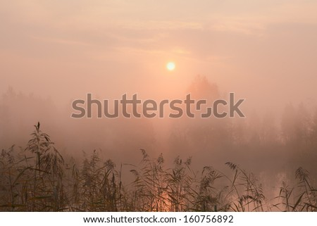 autumn fog - stock photo