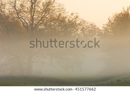 Autumn fog, sunrise in the forest. Forest with a sunrise in the background - stock photo