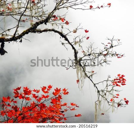 Autumn foggy day in the  snow mountains - stock photo