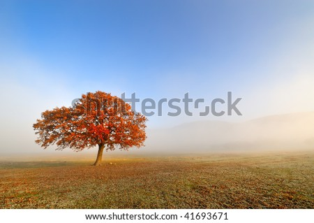 autumn foggy morning - stock photo