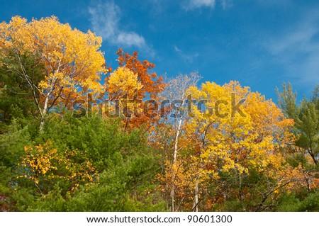 Autumn foliage and blue sky - stock photo