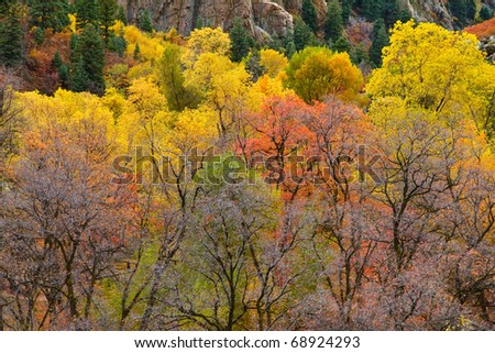 Autumn foliage at Storm Mountain in Big Cottonwood Canyon, near Salt Lake City, Utah - stock photo