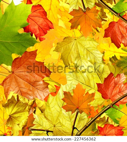 Autumn foliage. Golden Autumn. Photo. - stock photo