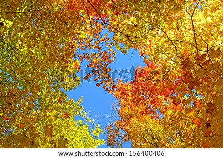 Autumn Foliage Showing Fall Colors - stock photo