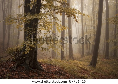 autumn forest and trees with colorful leafs - stock photo