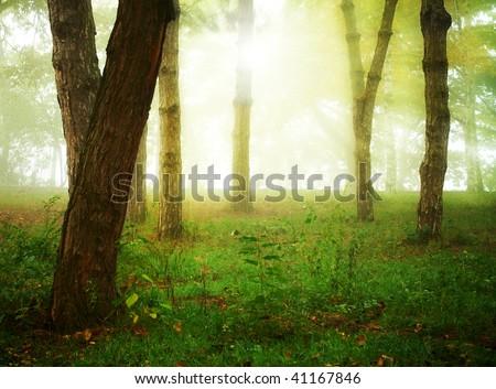 autumn forest background - stock photo