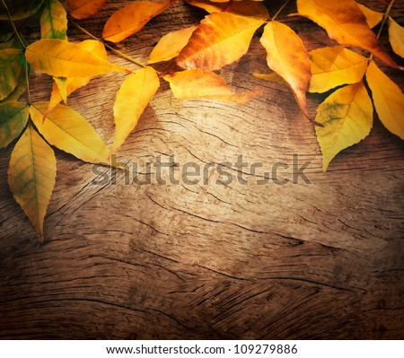 Autumn forest background. Fall Acorns on tree bark and season colorful leaves. with copyspace - stock photo