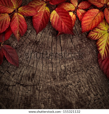 Autumn forest background. Fall red leaves on tree bark. Nature background - stock photo