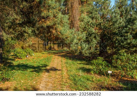 Autumn forest / beautiful nature, green trees - stock photo