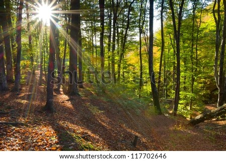 autumn forest by a sunny day