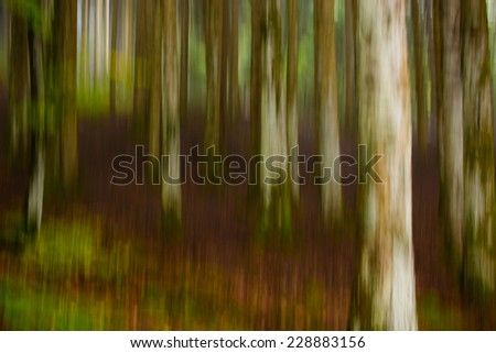 Autumn forest colors - stock photo