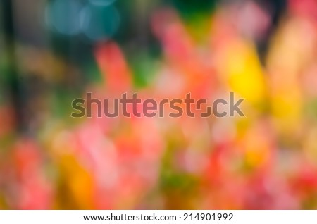 autumn forest  colors de-focused background - stock photo