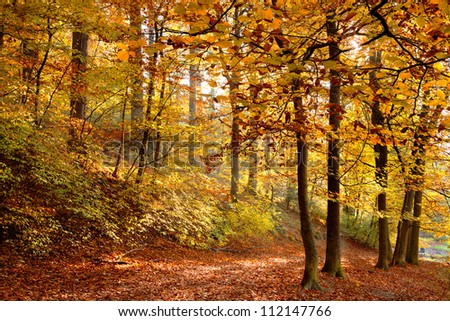 Autumn Forest.Forest Road. Landscape with the autumn forest. Dry leaves in the foreground. - stock photo