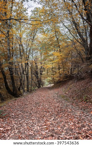 Autumn forest. Forest trail in autumn forest