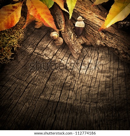 Autumn forest fruit background. Acorns on tree bark and autumn colorful leaves with copyspace - stock photo