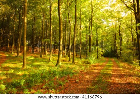 Autumn forest in all its warm colors - stock photo