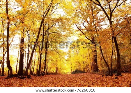 Autumn forest in europe-2 - stock photo