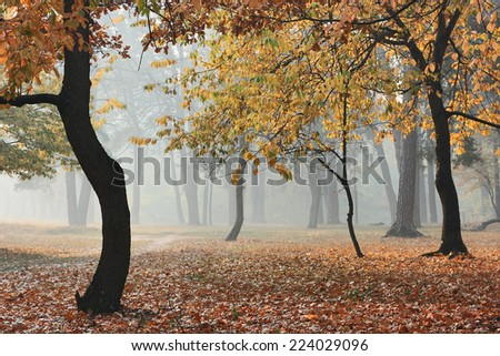 Autumn forest in fog. Sunlight through morning haze and dark silhouettes of trees in the autumn forest. - stock photo