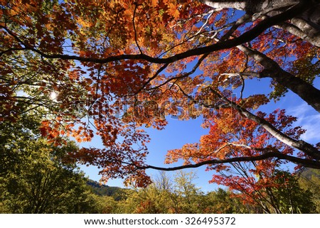 Autumn forest in Nagano, Japan. - stock photo