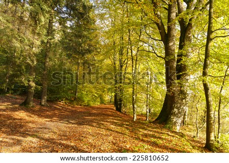 Autumn forest in north Poland./ Autumn forest - stock photo