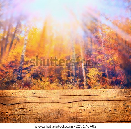 Autumn forest in sunlight and wooden table , nature background, toned - stock photo