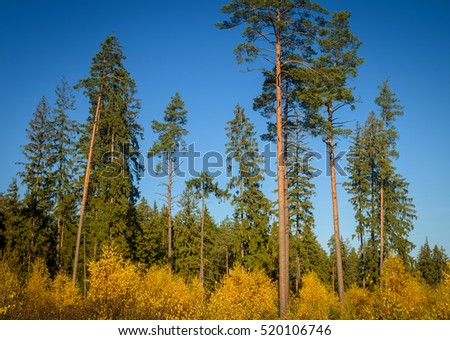 autumn forest in sunny day