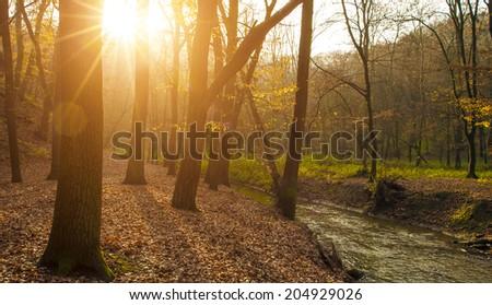 Autumn forest in sunrise - stock photo