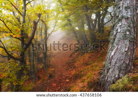 Autumn forest in the mountain - stock photo
