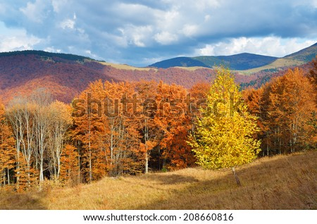 Autumn forest in the mountains. Bright sunny day trees. Autumn colors in nature