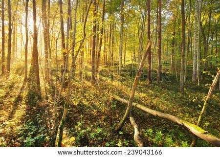Autumn forest landscape - stock photo