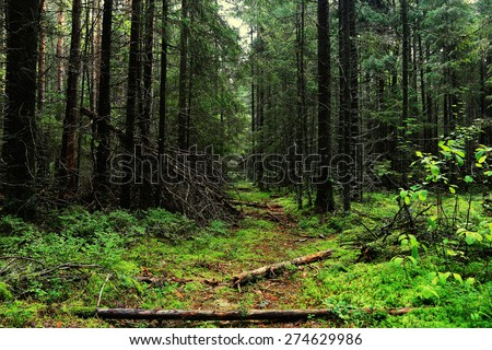 autumn forest landscape Indian Summer - stock photo