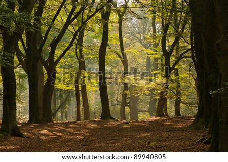 autumn forest landscape with a bright sun shine