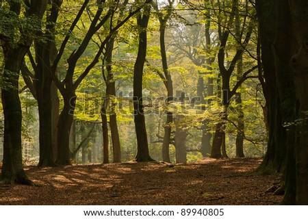 autumn forest landscape with a bright sun shine - stock photo