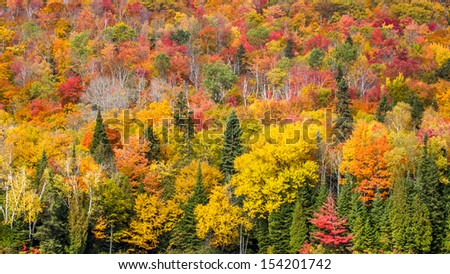 Autumn forest on the east coast - stock photo