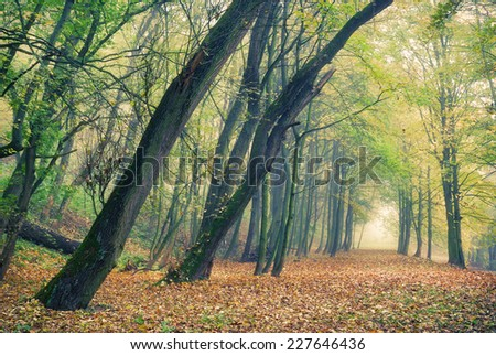 Autumn forest park in the morning fog - stock photo