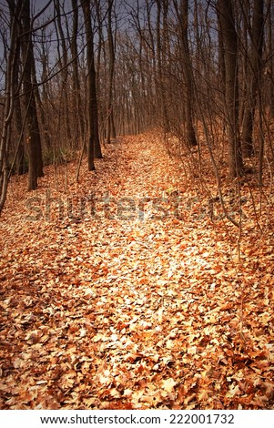 autumn forest path between black leafless trees - stock photo