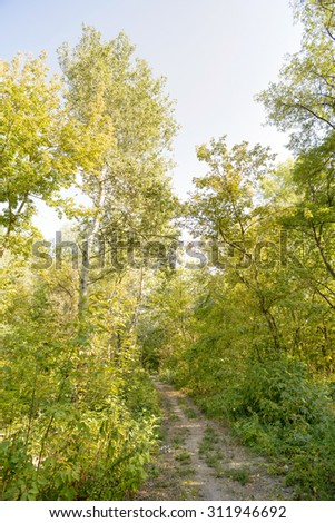 Autumn forest path between maple and poplar trees in a sunny day - stock photo