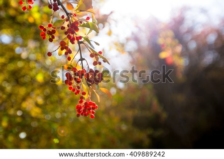 Autumn forest red berries on the branch - stock photo