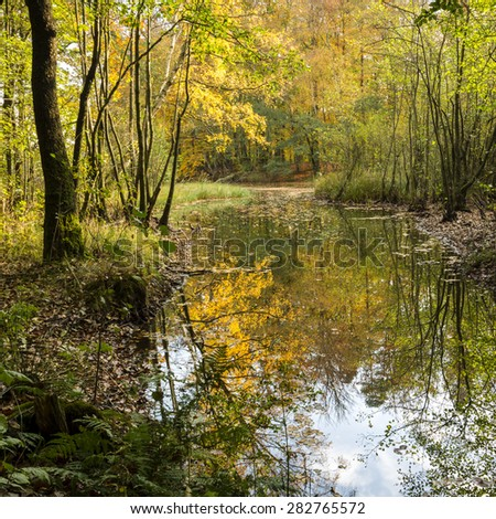 Autumn forest reflections in water north Poland./ Autumn forest water reflections - stock photo