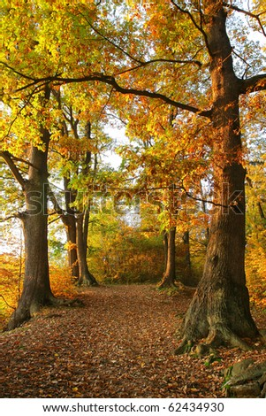 Autumn Forest Scenery with Oaks - stock photo