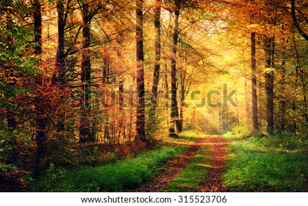 Autumn forest scenery with rays of warm light illumining the gold foliage and a footpath leading into the scene - stock photo