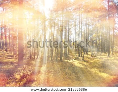 autumn forest sunbeams - stock photo