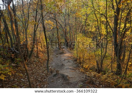 Autumn forest trail.