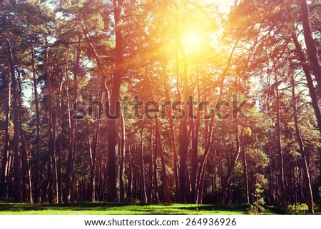 autumn forest trees - stock photo