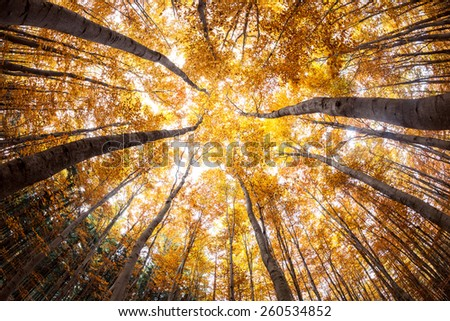 autumn forest treetops (intentionally distorted image; shot with a fisheye lens) - stock photo