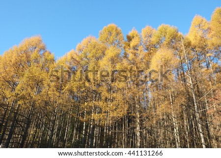 Autumn forest under the blue sky. - stock photo